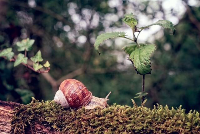 Balade de l'escargot