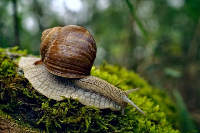 Les escargots en bourgogne - Cuisiner les escargots de bourgogne ...