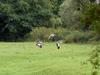 Trois cigognes