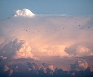Ciel et oiseaux
