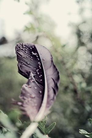 La plume