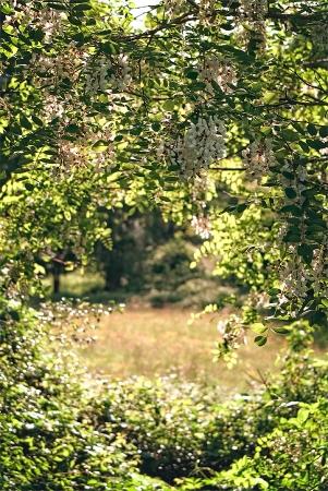 Entre les acacias