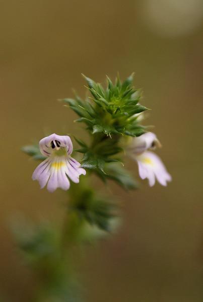 fleur-bois