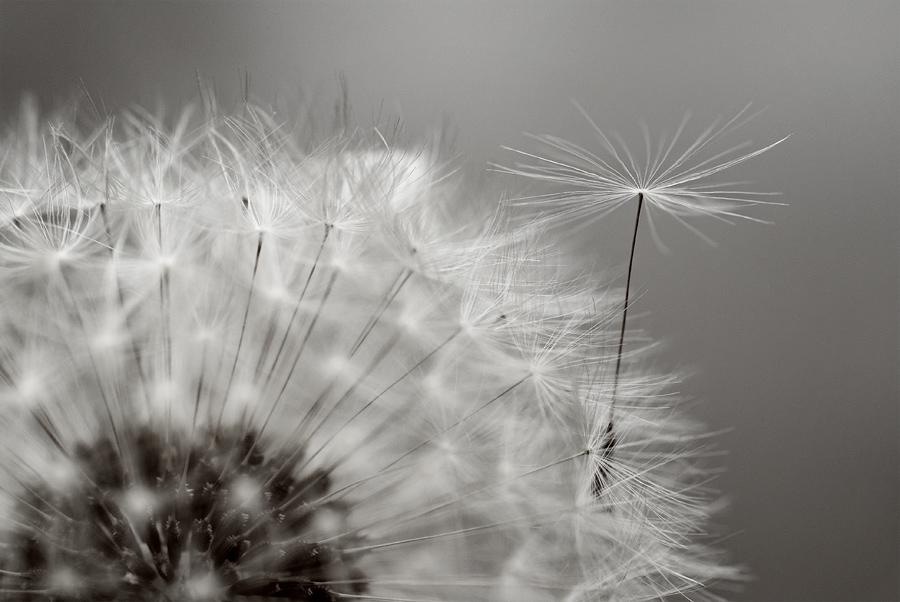 Fleurs D Aurore