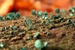 champignons-minuscules-verts