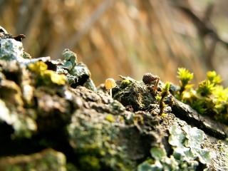 champignon-petit-ecorce