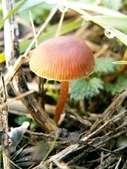 Petit chapeau de champignon