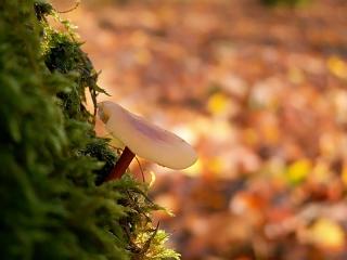 champignon-arbre