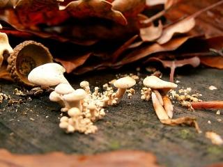 Champignons minuscules