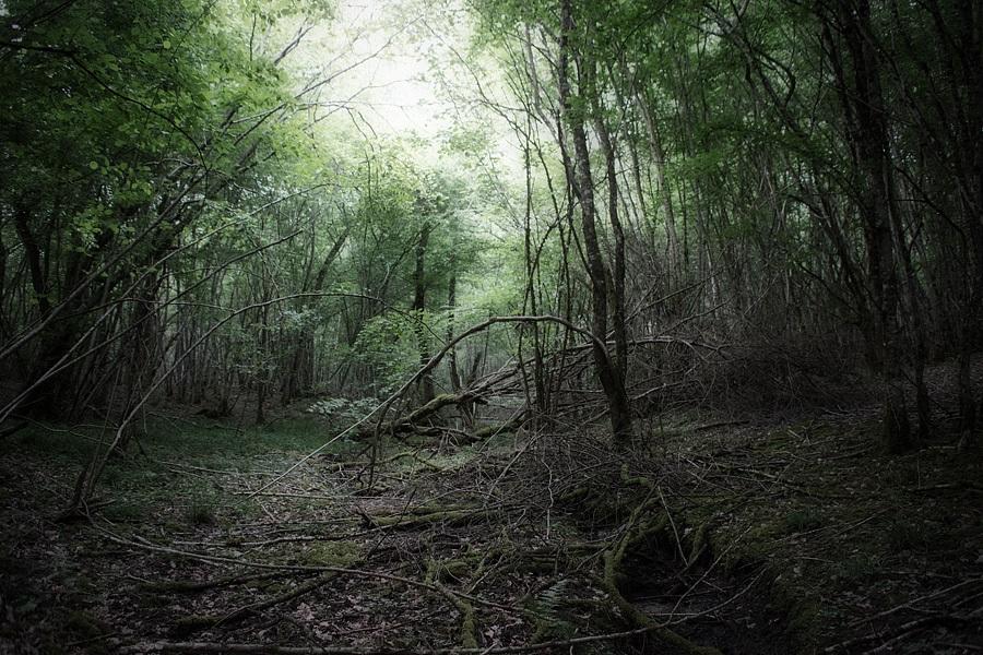 Le bois, photographie nature, zipanatura