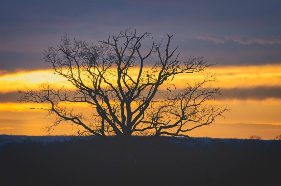 L'arbre au soir