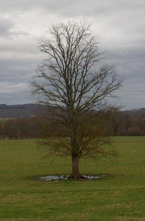 Un mont, un arbre