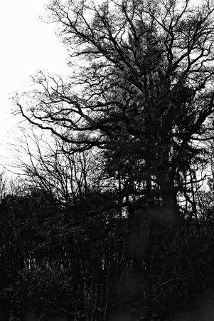 Nostalgique arbre nu