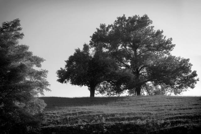 Terrasses
