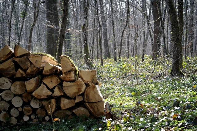 Le tas de bois