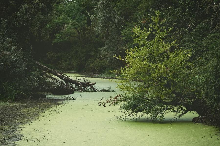 Bras mort de Loire
