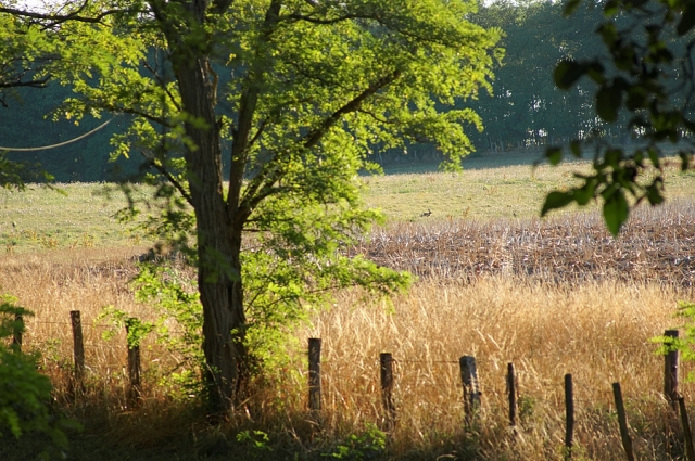 Le champ des lièvres