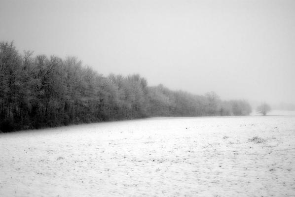 Lisière de neige