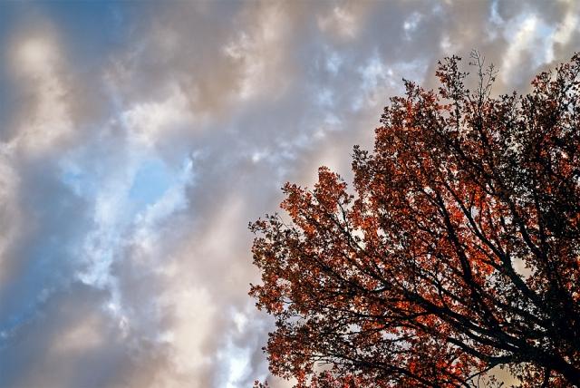 Chêne automne