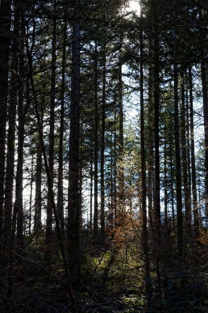 Forêt de Germiny