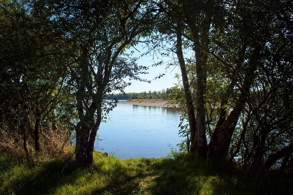 Loire entre les arbres