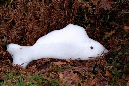 Poisson des neiges