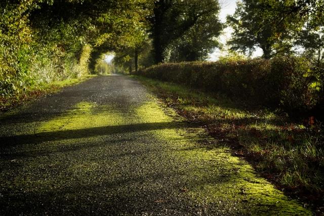 La route du bois coucou