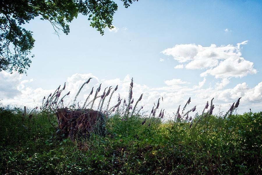 Digitales pourpres, photographie nature, zipanatura