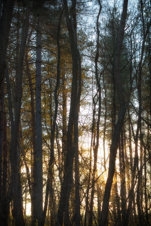 La lueur du bois