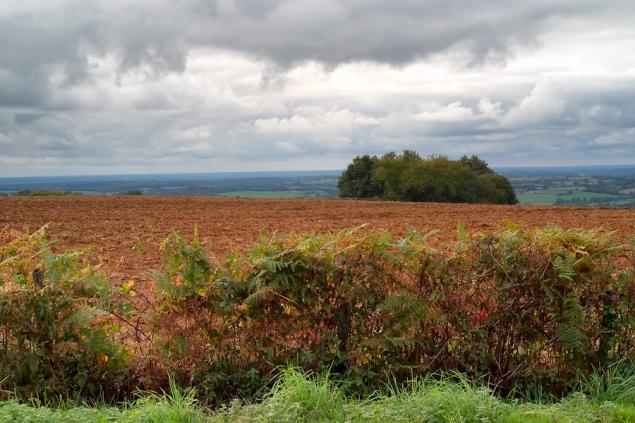 Le champ rouge