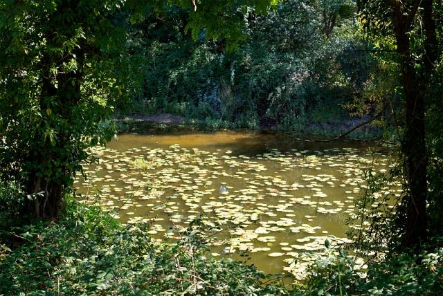 Le traitement complexe du microorganisme végétal de longle