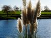 Les roseaux et l'étang