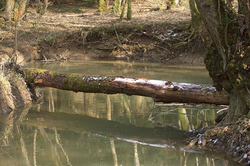 foret-arbre-pont