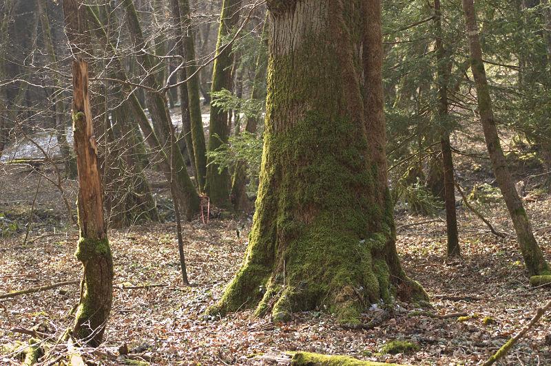 foret-arbre