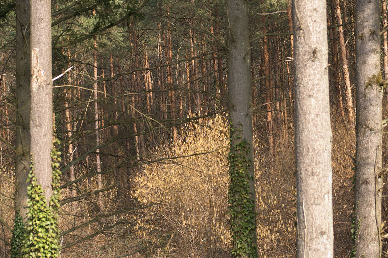 foret-buisson