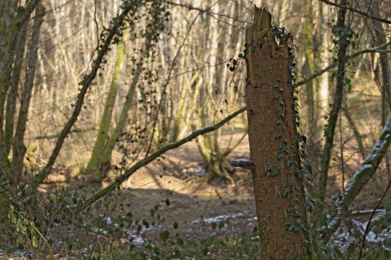 foret-tronc-champignon