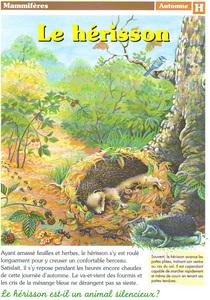 herisson-mammifere