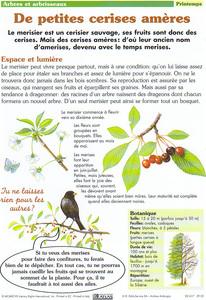 merisier-printemps