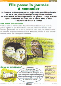 oiseaux-hiver