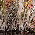 racines-riviere-min